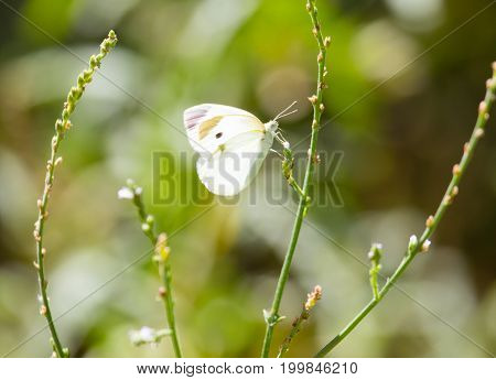 White butterfly on a plant in nature .
