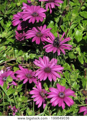 PURPLE FLOWERS WITH GREEN LEAFED BACK GROUND 38ki