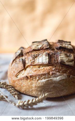 Fresh sourdough artisan bread and wheat on kitchen towel