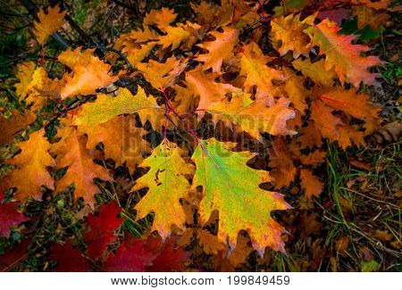 abstract autumn branch - natural background