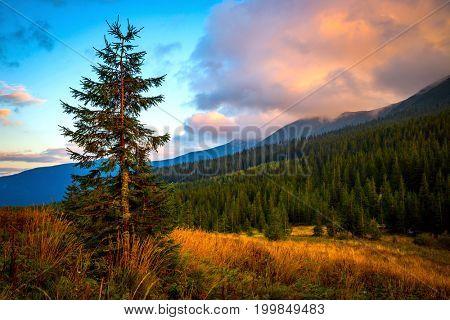 evening  landscape in Carpathians - take it in Ukraine