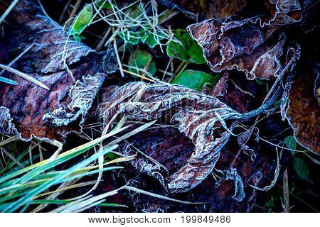 abstract frozen autunm leafs on green grass