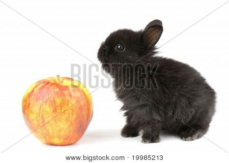 Racy  Rabbit