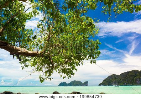 Branches Overhanging Green Getaway