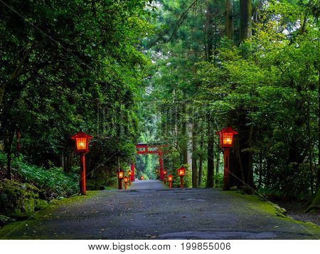 The night view of the approach to the Hakone shrine in a cedar forest. With many red lantern lighted up and a great red torii gate.
