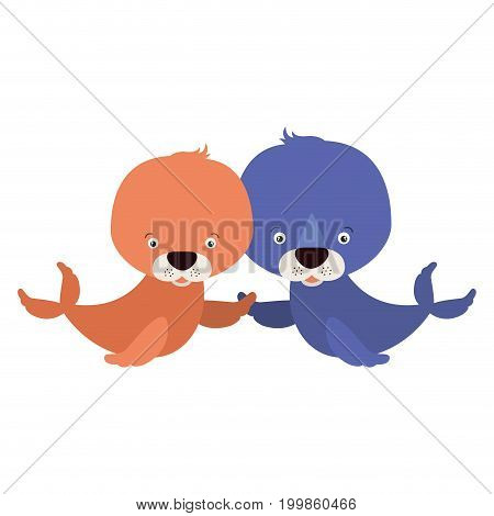 white background with colorful caricature couple cute animal seals aquatic vector illustration