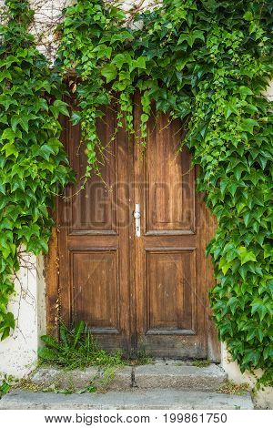 Ancient old wooden door with green plants.