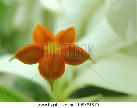 Pequeña flor con gran resolución y además con colores fuertes