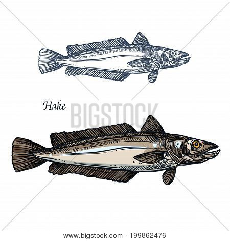 Hake fish, seafood isolated sketch. Deep sea predatory animal european hake for fish market label, fishery industry or fishing club symbol, seafood recipe themes design