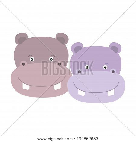 white background with colorful caricature face couple cute animal hippopotamus vector illustration