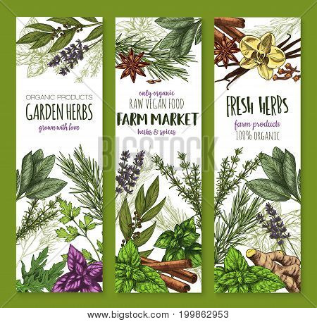 Herbs and spices banners set. Basil, rosemary, mint and thyme, parsley, cinnamon, ginger, bay leaf and vanilla, arugula, oregano, anise and dill, lavender, cloves and sage sketch poster design