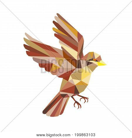 Low polygon style illustration of a sparrow flying viewed from the side set on isolated white background.