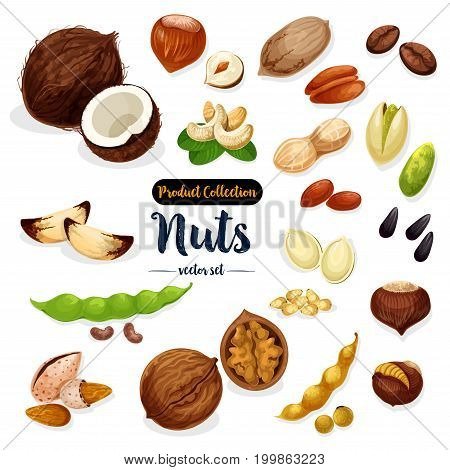 Nuts, seeds and beans set. Almond, peanut and walnut, pistachio, hazelnut, cashew, brazil and pine nut, coffee bean and pecan, soy, sunflower and pumpkin seed, coconut, chestnut for food design