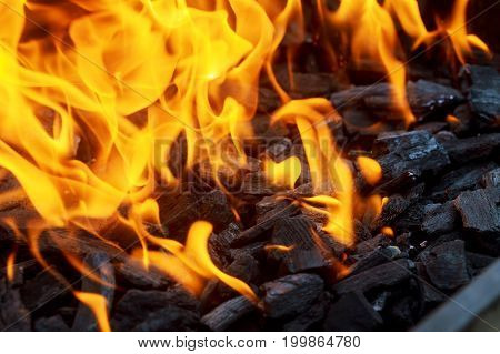 Close up of fire and flames on a black background Fire coal