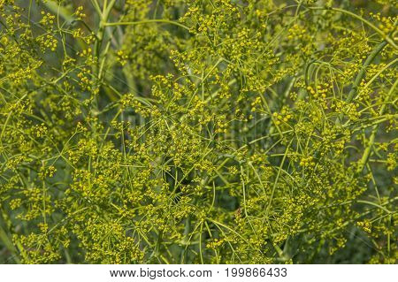 Flowering Yellow Plant. Floral Background