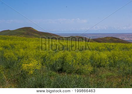 Blooming Yellow Steppe In Spring, Kazakhstan