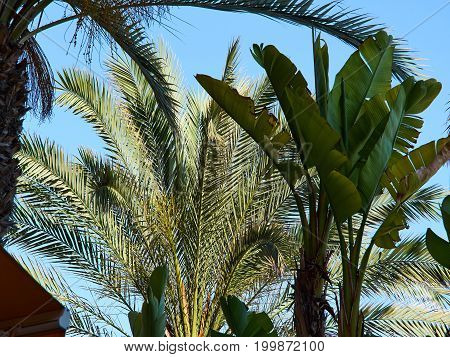 Palm coconut trees in a beautiful beach restaurant great summer tropical vacation