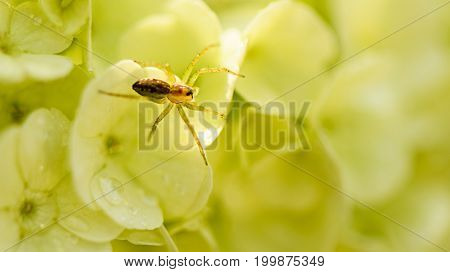 Spider Closeup Sitting On The Flowers In Green Tones