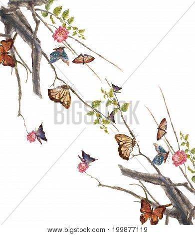 watercolor painting of butterfly and flower on white background