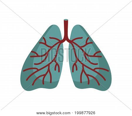 Human lungs icon in cartoon style. Body anatomy element, health medical sign, internal organ, human body physiology isolated on white background vector illustration.