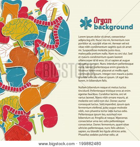 Flat medical background with colorful human internal organs and big text field vector illustration
