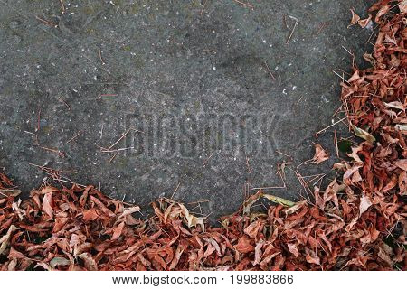 Dry Leaves On A Concrete Surface - Background For Design, Advertising.