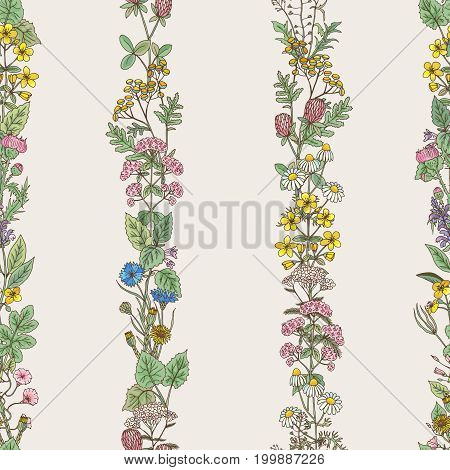 Seamless pattern of vertical tracery of hand drawn herbs and field flowers. Vector illustration