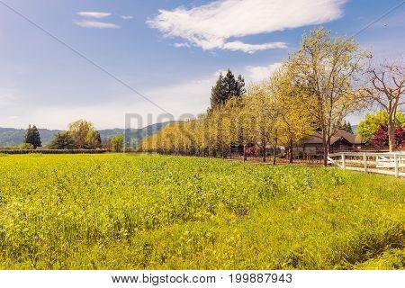 American Tradicional Landscape In Countryside