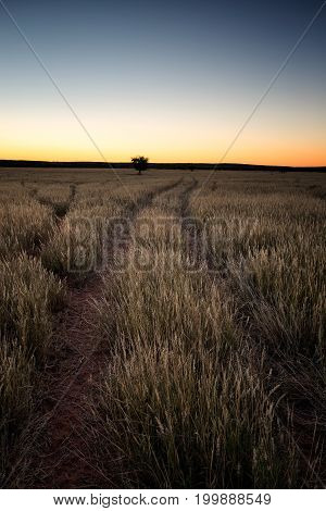 Wide Angle Landscape Views Of The Scenic Kalahari Region In The Northern Cape Province Of South Afri
