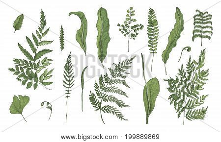 Fern realistic collection. Hand drawn sprouts, frond, leaves and stems set. Colorful vector illustration