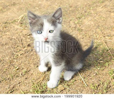 Cute kitten sitting on ground outdoors