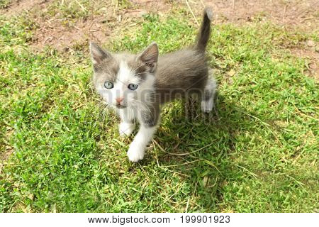 Cute funny kitten outdoors