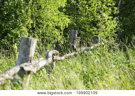 collapsed old wooden fence on green grass in the sun