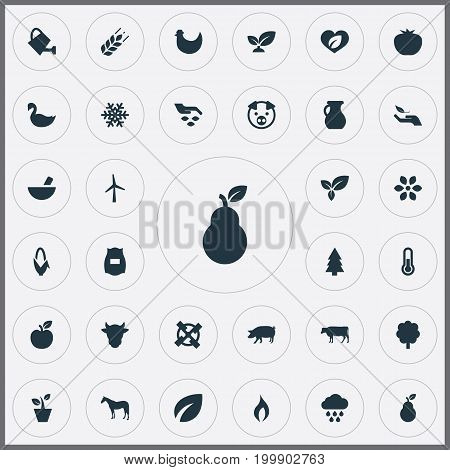 Elements Snowflake, Shield, Pounder And Other Synonyms Vegetables, Spruce And Can.  Vector Illustration Set Of Simple  Icons.