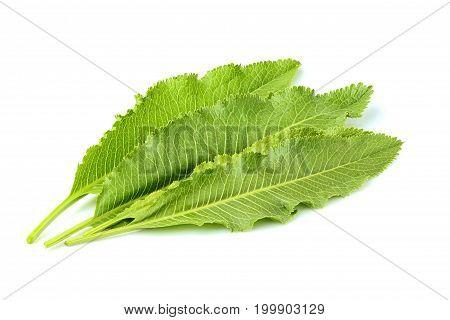 Horseradish leaves isolated on a white background.