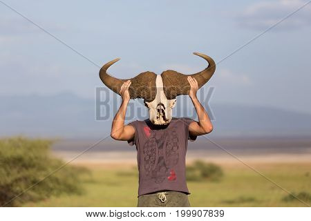 Man holding big african buffalo skull wearing it like a mask in nature on african wildlife safari, Amboseli national park, Kenya.