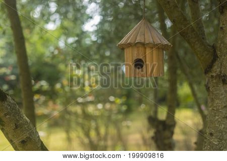 Little bird nest home hanging on a tree