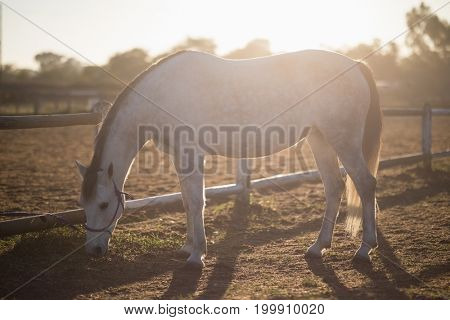 Horse grazing on field at barn during sunny day