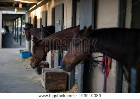 Horses in a row at stable