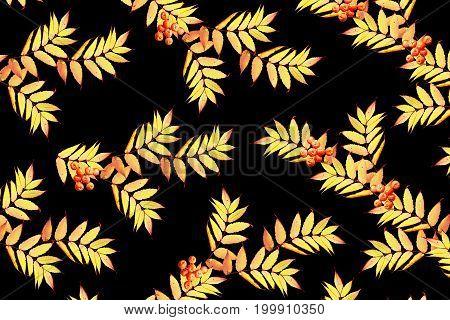 Bright colorful autumn foliage isolated on black background