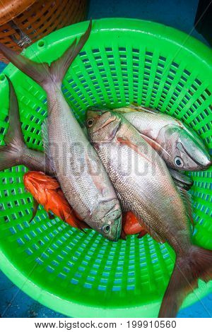 Rusty Jobfish And Grouper Fish  In The Green Basket On Fishing Boat
