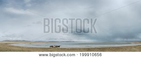landscape of amazing lake with horses on shore at cloudy day