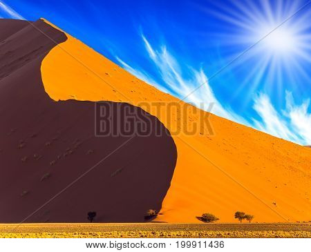 Namibia, South Africa, sunset. Hot sun of the Namib desert. Orange, yellow and  purple dunes and small tree. The concept of extreme and exotic tourism