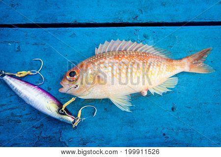Fresh Fish On The Blue Wooden Floor