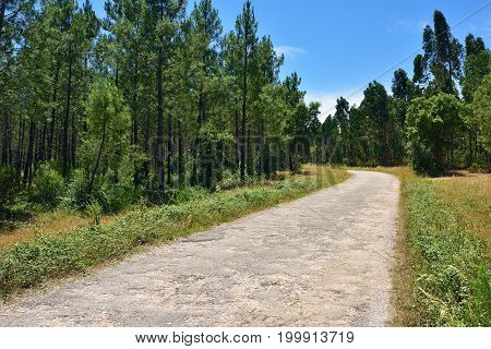 Road In Forest, Portugal
