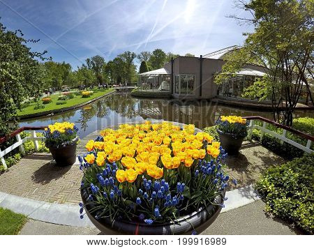 KEUKENHOF HOLLAND - MAY 14 2017: Vase with yellow tulips and hyacinths in the background of the pond in the Royal Keukenhof Park