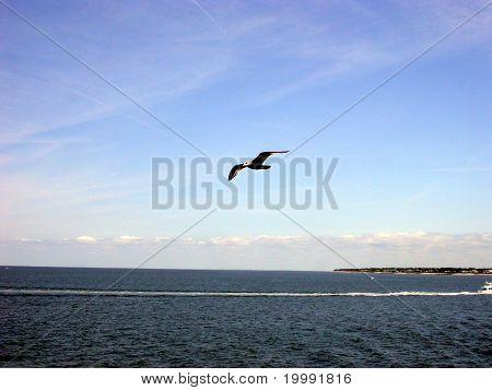 Jonathon Livingston Seagull??