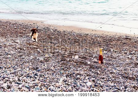 A Bottle Of Champagne And A Dog On The Background Of The Sea.