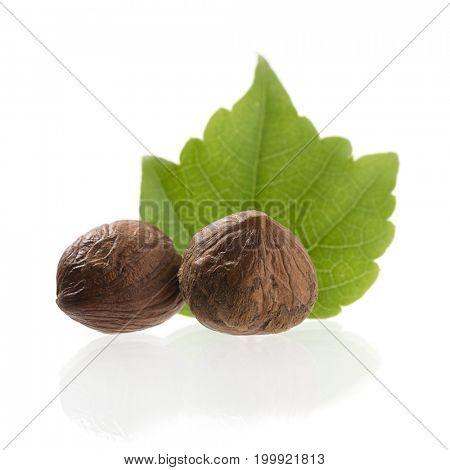 Hazelnut close up isolated on white background