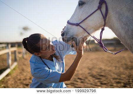 Female vet examining horse mouth at barn